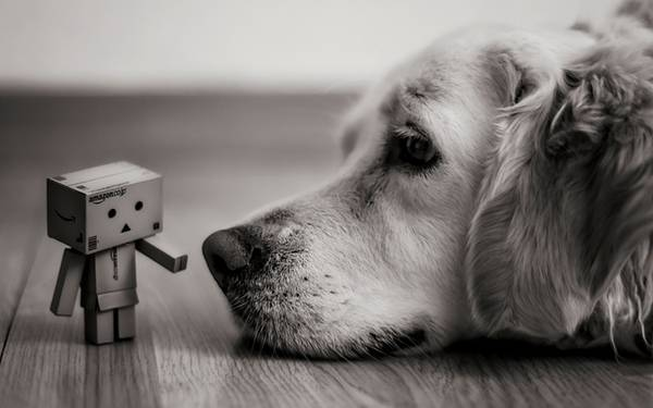 wallpaper-monochrome-dog-04